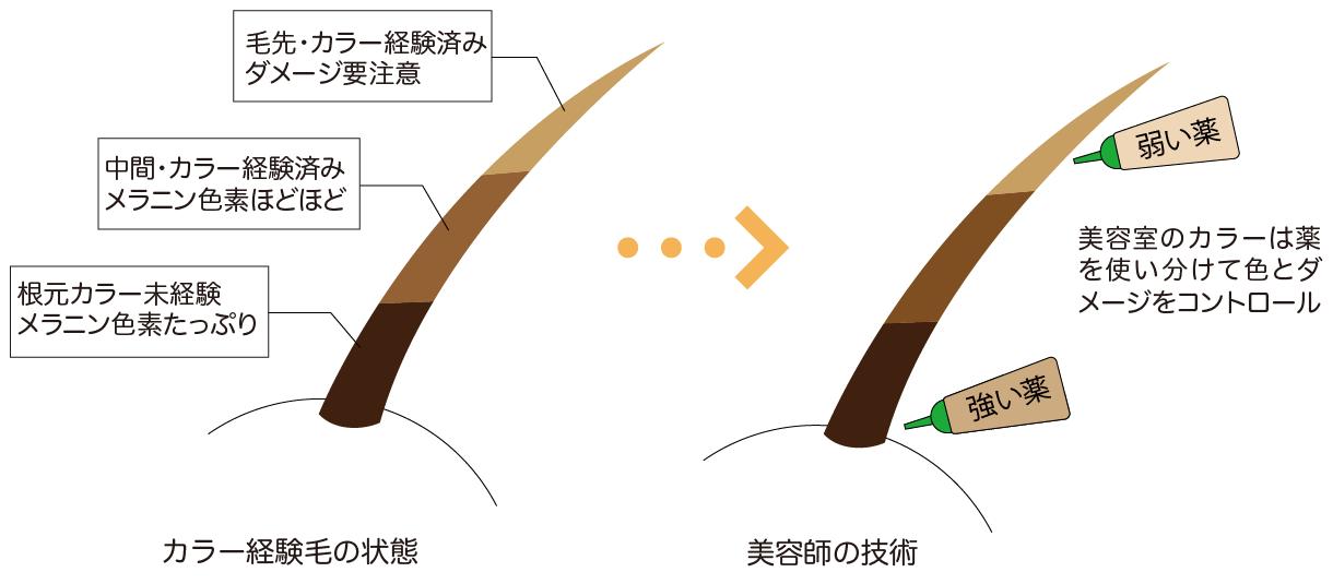 図解:髪の毛の部位によって薬を使い分けダメージをコントロールする美容師の技術