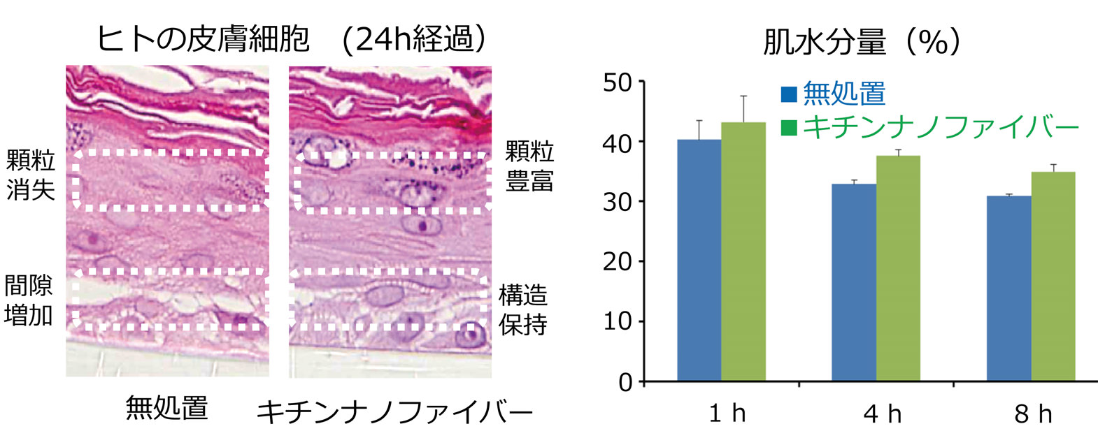 図:(左)キチンナノファイバー塗布24h経過後のヒト皮膚の状態写真(無処理と比べ、顆粒豊富、構造保持)(右)肌水分量(%)グラフ1h、4h、8h後全て無処理よりキチンナノファイバーの方が上回っている